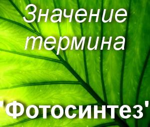 что значит Фотосинтез?